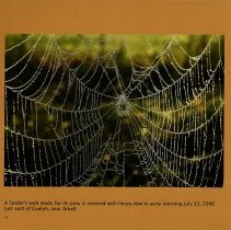 Image of Spider's Web, 2006
