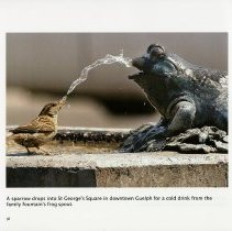 Image of Bird at Family Fountain's Frog Spout, St. George's Square