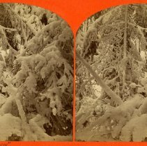 Image of 1972.10.145 - Card, Stereograph