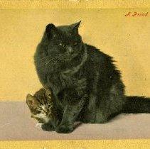 Image of 1981.241.49 - Postcard