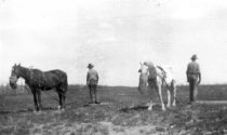 Image of Jim and John Gully, in Field with Horses