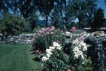 Image of Garden at Eastman Hill, 1960 - 2001.12.0055