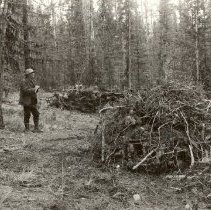 Image of Brush Piled and Ready for Burning, Big Blackfoot Timber Sale - 2006.009.041