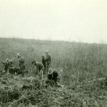 Image of Planting Crew