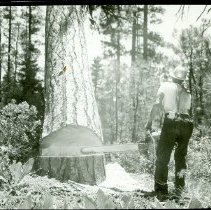 Image of Cone Mountain Timber Sale