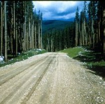 Image of National Forest Road  - 2007.014.184