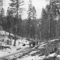 Image of Horses Pulling Yellow Pine Logs Down Log Chute, Spring Gulch - 2011.005.016