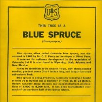 Image of Blue Spruce Tree Education Poster   - Poster