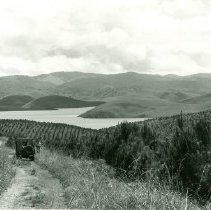 Image of Ankoret Pine Plantations north west of Dalat