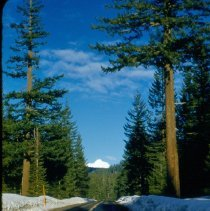 Image of Pines along US #20 near Black Butte - 2007.007.038G