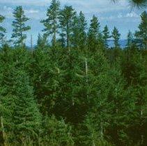Image of Arrowwood Point - North East Maury Mountain - 2007.007.084F