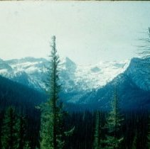 Image of Trees and mountains