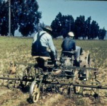 Image of Tractor Cultivator in Guayule Field - 2005.051.099