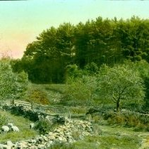 Image of A White Pine Woodlot Adds Value to a Farm - 1999.008.002.GT088