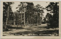 Image of Carr.0685 - Postcard