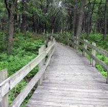 Image of Low lying path bridge in Gibson Woods Nature Preserve