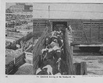 Image of Card 44 - Livestock Transport