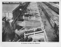 Image of Railroad And Stockyard
