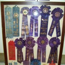 Image of Show Horse Ribbons