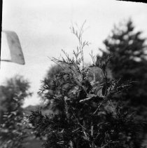 Image of Animal Pictures 1919-1923 015.7