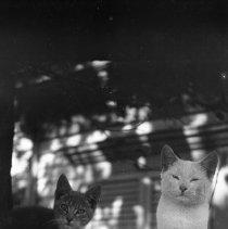 Image of Cats Retreat - 09/13/1921