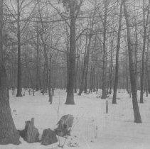 Image of Howell's Woods, East Millstone, NJ (c. 1910) -