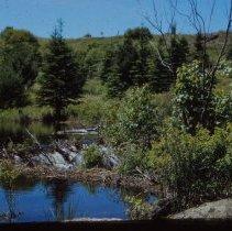 Image of Beaver Dam