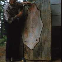 Image of Beaver Skin