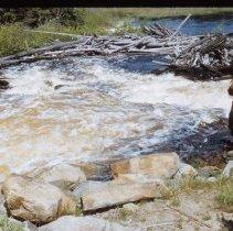 Image of Sasajewun Rapids