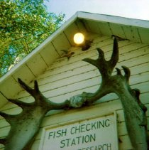 Image of Fish Checking Station