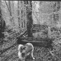 Image of 4507 - Jack Murdock at gravesite of Capt. John Dennison