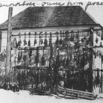 Image of 275 - Traps, snowshoes, guns from poachers. Cold storage house.