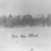 Image of 290 - Dog team and sled at Mickle Dymet Lumber Company, Birch Lake Camp, Livingston Township.
