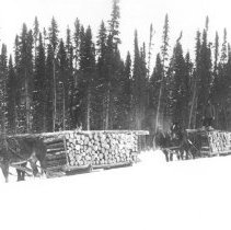 Image of Three sleighs loaded with saw logs in the bush.