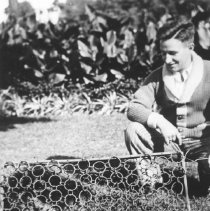 Image of ca. 1932 - Beaver in live trap for Canadian National Exhibition