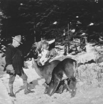 Image of 472 - Superintendent Millar and deer.
