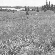 Image of 582 - Old Dennison Farm, Lake Opeongo