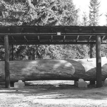 Image of 631 - White Pine log