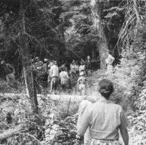 Image of Conducted Hike, Old Tanamakoon Trail