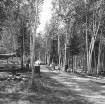 Image of 841 - General camping area, Coon Lake, August., 1960.