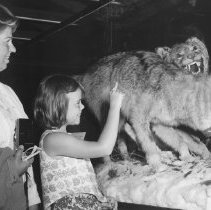 Image of 1963 - Timber Wolf Exhibit, Park Museum, 1963.