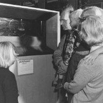 Image of 915 - Fish Tanks, Museum, 1953.