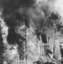 Image of 973 - Forest Fire