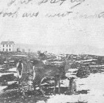 Image of 1009 - Taken in front of Mowat Lodge, Algonquin Park, Ont.