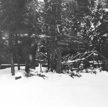 Image of January, 1954 - Forest Bay Camp