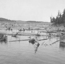 Image of 1269 - Drowned wood at the end of Canoe Lake