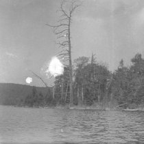 Image of 1934 - Old giant on South Tea Lake