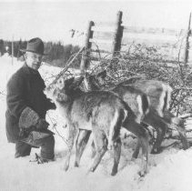 Image of January 1929 - Superintendent J.W. Millar with three young deer, Cache Lake
