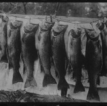 Image of 1455 - George B. Hayes party - South River to Rainy Lake via Cedar Lake and White Trout Lake.