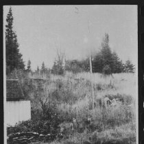 Image of 192- - Yard near Cache Lake houses.